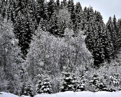 VINTER: Drømmer du om en hvit jul, dette tror meteorologene om juleværet i Sarpsborg.