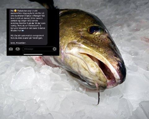 """FIKK SMS-er: En rekke personer i drammensdistriktet har mottatt denne SMS-en signert """"Fiskebilen"""". Daglig leder i Fiskebilen AS sier at de ikke skal sende ut slike SMS-er."""