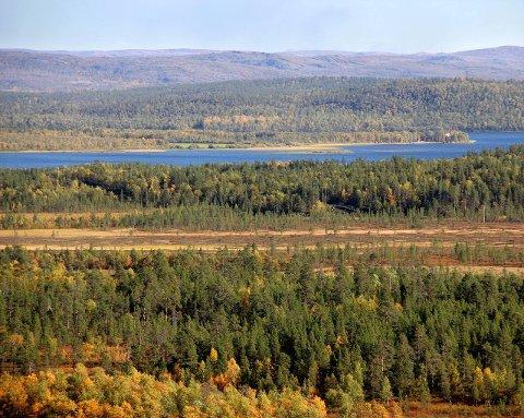 TERRENG: Det er søkt i et stort område rundt 96-høyden og Pasvikelva både sommer og vinter. Foto: Amund Trellevik