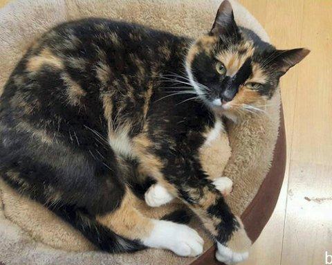 PÅ VANDRING I SKOGEN: Denne katten ble funnet i skogen ved Undersrud. Vet du hvor den hører hjemme?