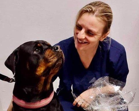 Det var full feiring på klinikken da Ziva hadde gjennomført behandlingen. Da vanket både diplom og godsaker fra veterinær Vibeke Fosse.