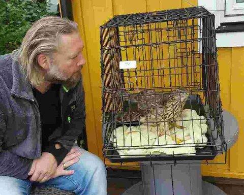 TOK GREP: Karl Peter Andersson og kona tok hånd om en fugl som kræsjet inn i stuevinduet. (Foto: Privat)