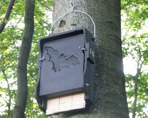 FOR BARN OG MØDRE: Denne flaggermuskassa i Bøkeskogen er kun ment for hunnene og barna om sommeren.