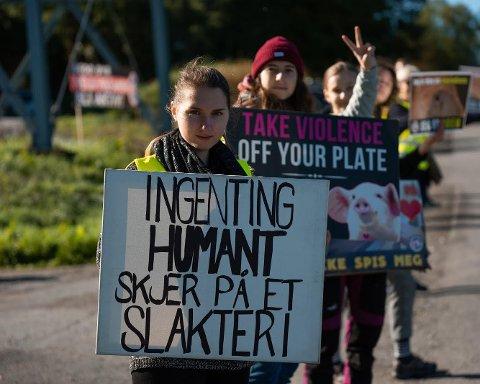 AKSJON: Oslo Animal Save skal demonstrere utenfor Nortura Tønsberg onsdag. (Pressefoto)