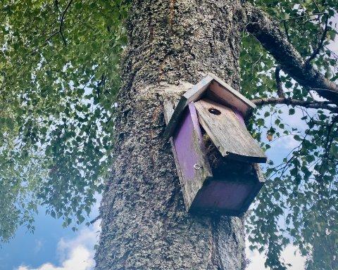 AFFEKSJONSVERDI: Etter 16 år ser morfars fuglekasse litt sliten ut. Men det er håp!