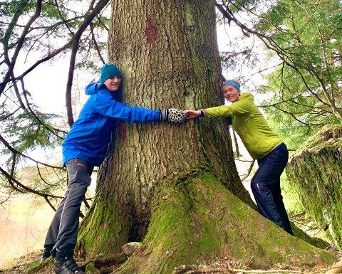 Tor Line og Anne-Reidun har muligens funnet Norges største tre.