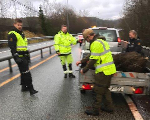 Tidkrevende å få dyret ryddet bort fra veien.