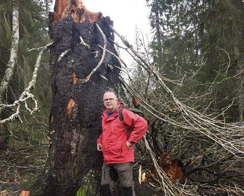 STORGRANA: Denne storgrana har stått i Litj Hjortskaret. Her er ordfører Bjørn Ivar Lamo ved storgrana som falt i høst. Brystmålet er 425 cm. Foto: Heidi Brennhaug