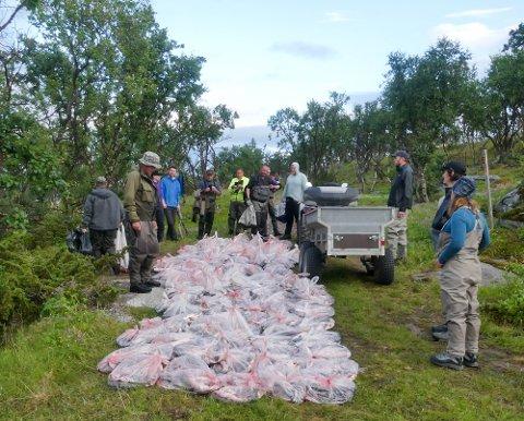 ENOMRE MENGDER: Nå kan Vestre Jakobselv Jeger- og fiskeforening og de andre forvalterne som forvalter vassdrag for FeFo kaste uspiselig pukkellaks på havet. De som er på bildet her ble gitt bort som mat.