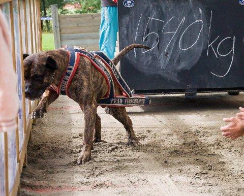 Kjempesterk: Hunden Ivan ble vurdert som ikke-håndterbar av politiet. Den ble dermed avlivet.