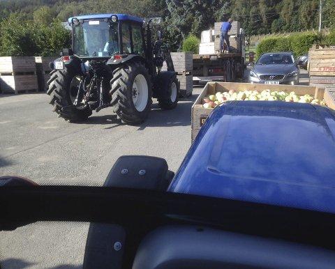 Uoversiktlig: – Lastebil står på gårdstunet for å hente epler, lastebilsjåføren står på planet for å ta imot kasser som lastes på av min kone i traktor og svigerfar ved jekketralla (ikke synlig bak traktoren). Hytteeier i bil snirkler seg fram over gårdsplassen. Her er det ikke ønskelig med turgåere i tillegg, sier Ivar Jørgensen, som tar bildet fra traktoren.