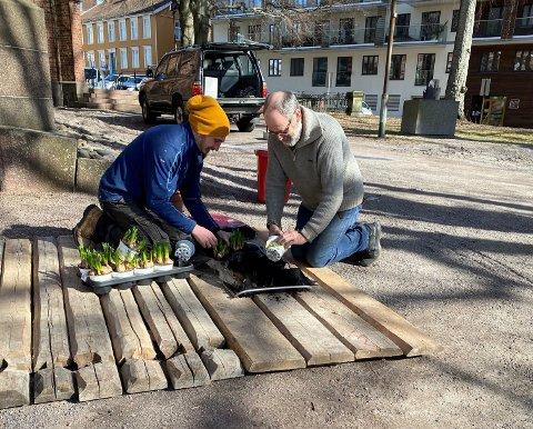 HÅPETS VEI: HÅPETS VEI: Kunstneren Tollef Thorsnes (til høyre) og Jerome Richter klargjør spirende blomster på Håpets vei som nå kan oppleves ved Domkirken i Tønsberg.