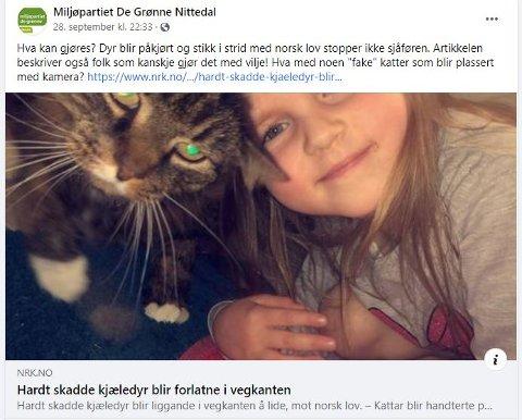 """KATTER MED KAMERA: Miljøpartiet De grønne foreslår å sette ut """"fake"""" katter med kamera for å ta de som enten ved uhell eller med vilje kjører på katter og så ikke stopper og melder fra."""