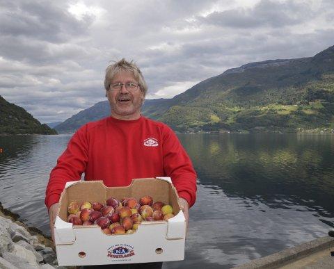 Nøgd: Torleiv Naa Helle, dagleg leiar på Nå fruktlager, konstaterer gode avlingar av plomme og eple. Her  med freistande smakfulle plommer. Foto: Mette Bleken