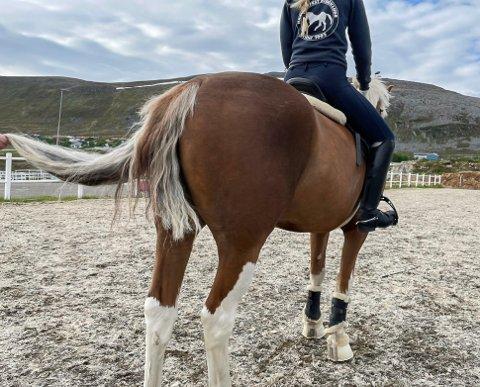 ADVARER: Hvem har skamklipt Zureals hale? - Om du blir truffet av et hestespark, kan det gå riktig ille, advarer Hege Giæver Mathisen.