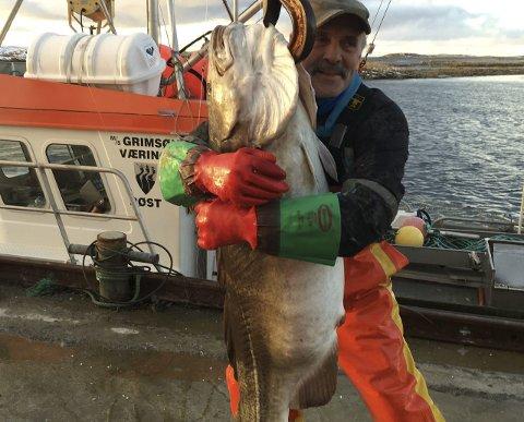 Fiske: I de fire minste kommunene i Lofoten er hver femte sysselsatte tilknyttet jordbruk og fiske.
