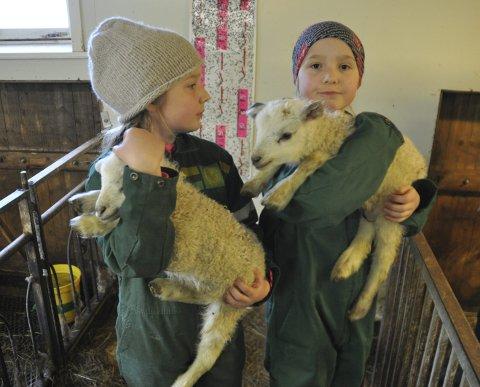 Kjempeartig tid: Tvillingene Amalie og Cornelia hjelper gjerne til under lammingen på besteforeldrenes gård i Skjelfjord. – Lam er nydelige dyr. Det er spennende å være med på lammingen, sier 11-åringene. FOTO: MAGNAR JOHANSEN