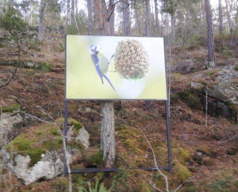 Ceci n'est pas une pipe: Dette er ikke en blåmeis, men et bilde av en blåmeis. Slik ville den belgiske surrealist-maleren René Magritt uttrykt det. Dette er ett av bildene som Kolbotn fotoklubb har satt ut langs kyststien på Svartskog.