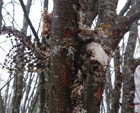 HANG I TREET: Det døde dyret, trolig en katt, ble funnet hengende i et tre på Prestegardsjordet i Elverum denne uken.