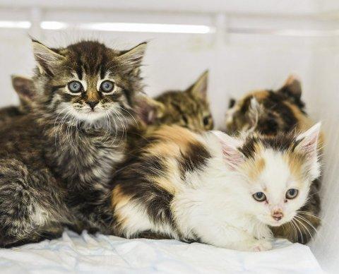 Kattungene ble funnet i et skogholt, men døde kort tid etterpå.