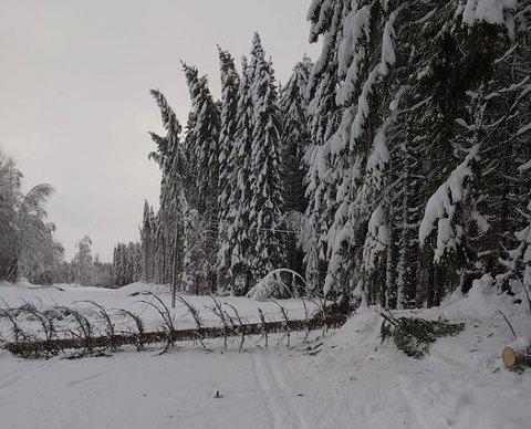 HINDERLØYPE: Lørdag var det mange trevelt i løypa mellom Øverby og skistua.