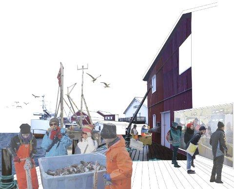 FISKE: Slik tenker arkitektene at man kan integrere turisme og fiskerier på Fredvang. – I stedet for at turistene skal vøre et irritasjonsmoment på kaiene, kan dere gi dem deres livs opplevelse og tjene penger på dem samtidig, oppfordrer Gisle Løkken i 70°N arkitektur.        ALLE TEGNINGER: 70°N arkitektur