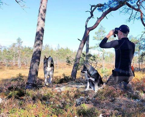 MÅ KANSKJE SPEIDE LITT EKSTRA: Elgstammen i Våler tåler i år et uttak på 78 dyr, mot 170 for 10 år siden.