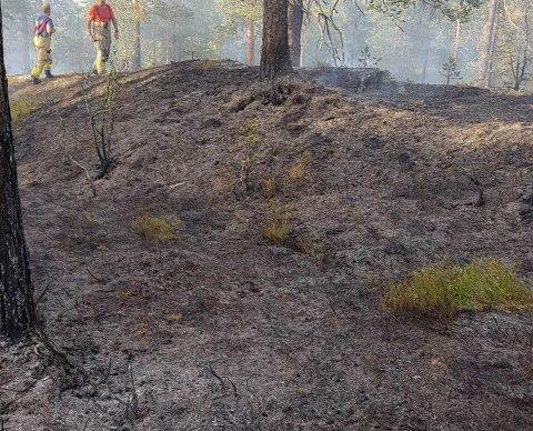 TØRT: Den pågående tørken har startet flere skogbranner de siste døgnene. FOTO: BRANNVESENET