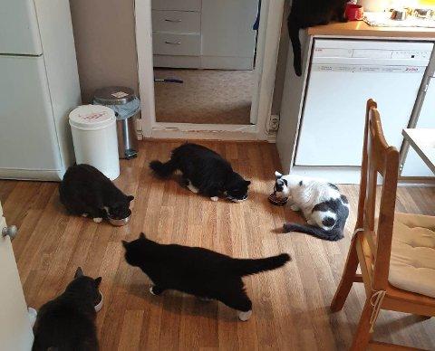 FULLT: Nå er det fullt hos dyrebeskyttelsen. – Ser du en syk katt kan du også ta den med til veterinæren, sier leder av Dyrebeskyttelsen i Vestfold, Åshild Marie Karlsen.