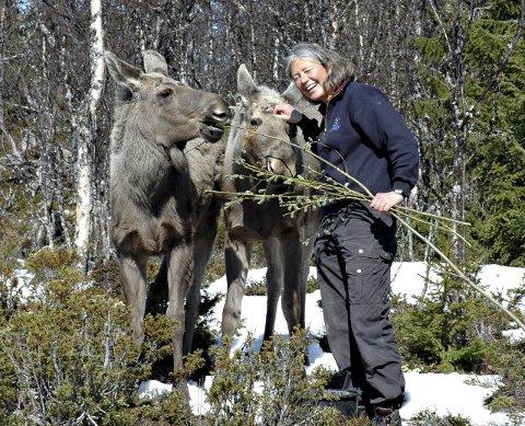Fra glede til sorg: Tuve Thorson er nå mye ute hos de gjenværende elgene. Foto: Langedrag