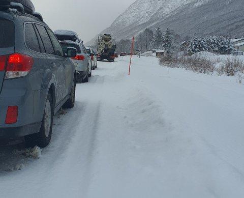 LANGE KØER: På E6 i Indre Troms fredag.