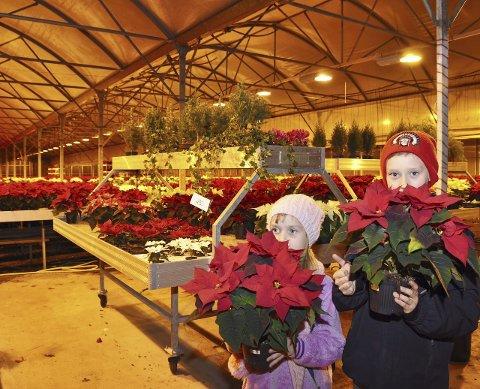 STORE: Lotta Marie og Lars Magnus Myhrene med de største julestjernene de kunne finne på gartneriet. FOTO: EDGAR DEHLI