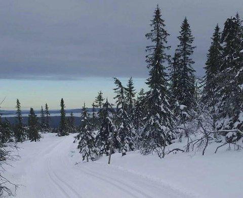 Det er flotte skiløyper på Vikerfjell. Foto: Ole Ringerud