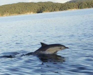 LEKEN KRABAT: Vi opplevde en delfin i Oslofjorden like ved Ramton på torsdag. Den var veldig leken, og underholdt oss rundt båten i lang tid, forteller Jannicke Kjølner fra Heggedal. Foto: Privat
