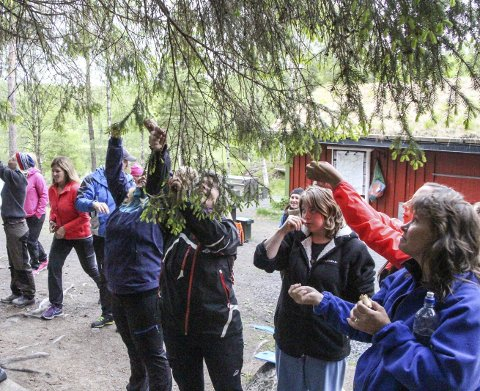 NATURLIGE RÅVARE: Granskudd var blant råvarene deltakerne på bålmatkurset selv måtte ut å sanke inn til det 3-retters måltidet på Mostjønna i Mosjøen. Foto: Vegard Olsen