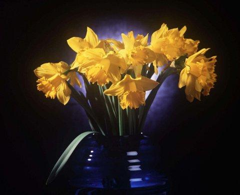 Bestillinger av blomster har økt kraftig etter at de strenge koronatiltakene trådte i kraft 12. mars. Illustrasjonsfoto: Pekka Sakki, Lehtikuva, NTB scanpix
