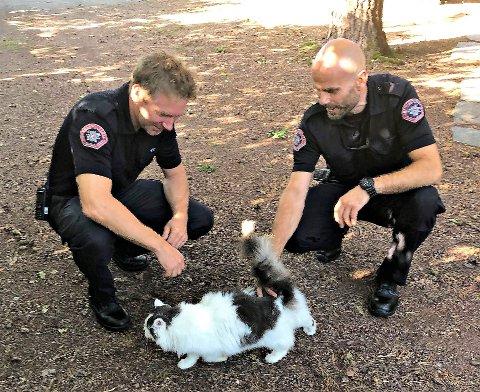 NEDE IGJEN: Katten hadde sittet i ei furu siden mandag. Tirsdag formiddag var den endelig på bakken igjen.