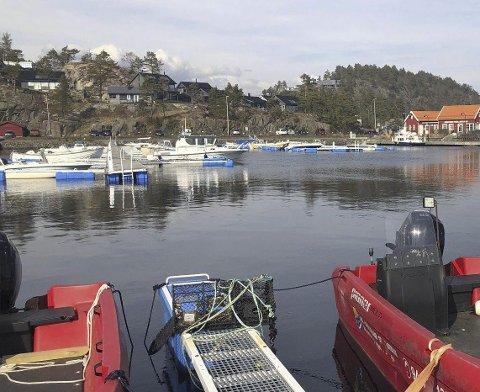 Hagefjorden Panorama: Det er i dette hyttefeltet at svømmebassenget kommer.