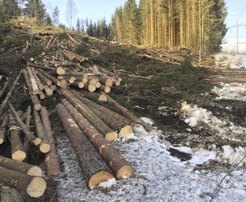 Flatehogst: Det er nettopp nærnaturen, skogen like borti høgget, som står mest lagelig til for hogg når det skal tjenes penger, mener De Grønne. foto: Hanne lisa maatt