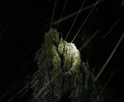 HAR JOBBET NATT OG DAG: Hovedårsaken til strømbruddene er at våt snø legger seg på trær, som knekker over ledningene.