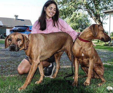BLODGIVERE: Ebba, til venstre, og Havanna sammen med matmor Sara Skybak i Gjesåsen. DE hundene er årets blodgiverhunder i Norge.