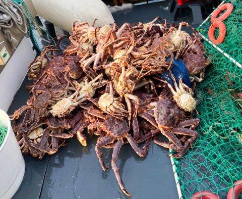 SLUPPET UT IGJEN: Dette er fangst fra en teine som ble konfiskert av sjøtjenesten den siste uken.