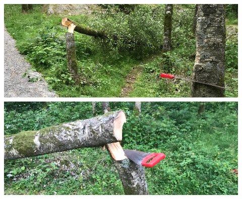 HÆRVERK: Noen har saget ned trær i Varberg. Vidar Nesheim i Egersund i Sentrum ber folk holde et øye med friluftsområdet.