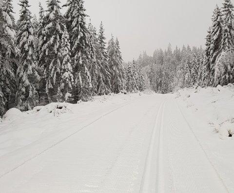FINE FORHOLD: Nypreppa spor mellom Kanada og Fallet i Lier fredag ettermiddag.