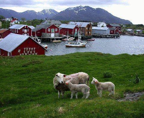 VAKKERT:  Innbyggerne i Vega har den høyeste gjelden per innbygger på Helgeland  Foto: Stiftelsen Vegaøyan Verdensarv