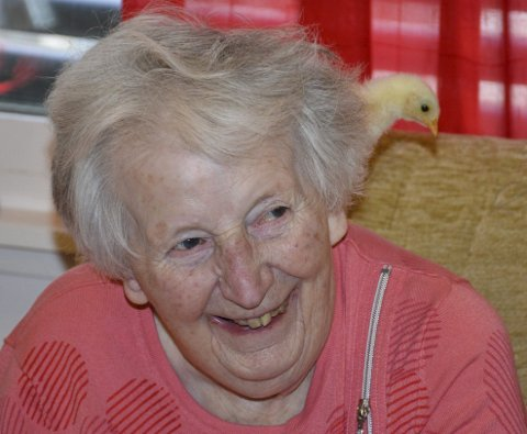 GLAD: Inger Fagerås har blitt glad i kyllingene Hans og Grete som kvikker opp hverdagen for de eldre ved Aurskog sykehjem.