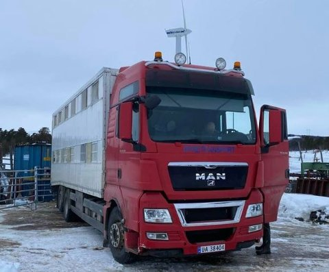 DYRETRANSPORT: Mandag kom bilen til Lusæter landbruk og hentet 12 storfe til Nordfjord Kjøtt i Loen.