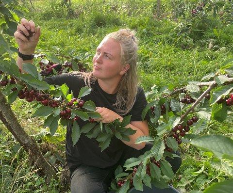 PLUKKAR: Her plukkar Ketija moreller, som Lærdal er storprodusent av.