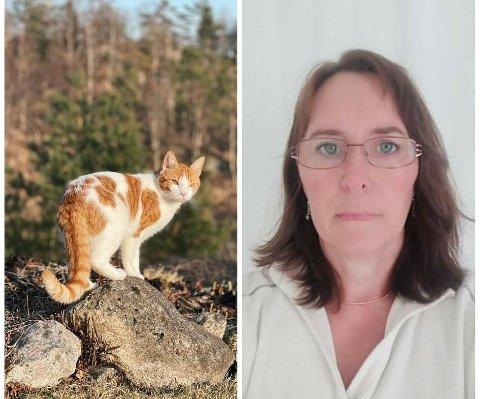 Påkjørt: Pusi ble påkjørt på Bøveien lørdag: - Som å miste et familiemedlem sier eier Solfrid Bø.