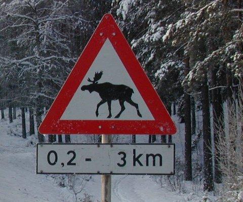 Mellom Bjonvika og E16 nøyer ikke veivesenet seg med slike fareskilt. Nå settes farten ned.